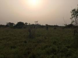 LAND FOR SALE @ DODOWA